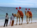 Kenyians are waiting for more tourists not only for riding a camel at Mombasa Beach