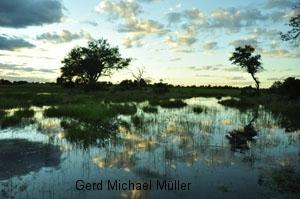 Sonnenuntergang und Spiegelung im Wasser in den Okavango-Delta Sümpfen. Sunset in the Okavango-Delta-swamps.
