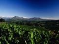 StellenboschWineyards