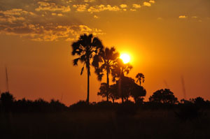 Sonnenuntergang im Okavango Delta. Sunset in the Okavango Delta