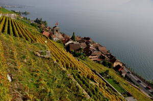 Unesco Weltkulturerbe Lavaux oberhalb des Genfersees. The wine yards and terraces Lavaux at the Unesco World Heritage