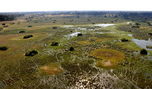Luftaufnahme des weltgrössten Binnendeltas, der Okavango Sümpfe in Botswana. Airshot above the world biggest inland delta and nature reserve Okavango swamps,