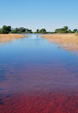 HF Farbenflash Okavango-Delta in der Kalahri-Wüste von Botswana | Botswana Colourfull spectacle: The flooded Okavango-Delta in the Kalahari-Desert. © GMC Photopress, Gerd Müller, gmc1@gmx.ch