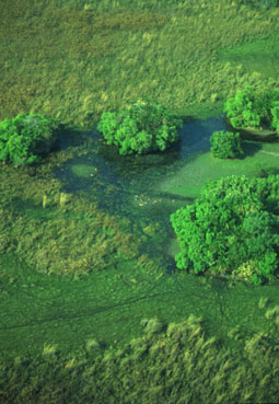 Botswana:Blühende Sumpflandschaft inmitten der Kalahari. The Okavango swamps in the desert of the Kalahari