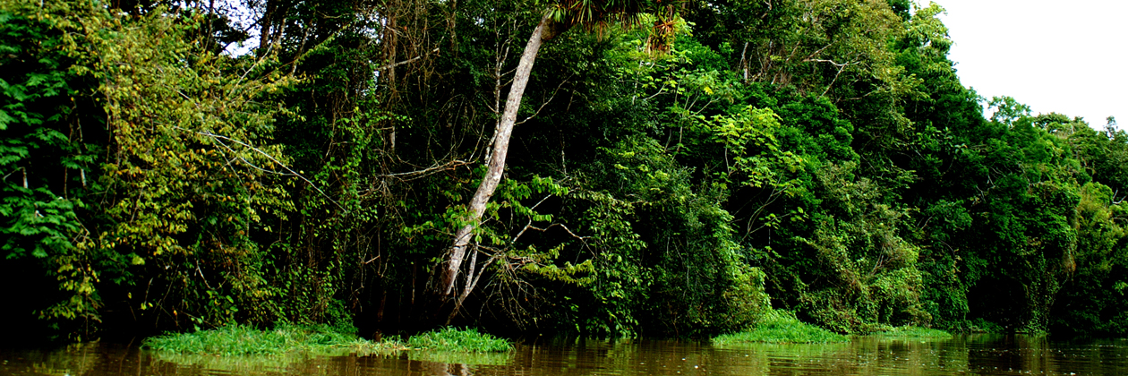 1260px header Rainforest