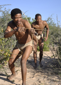 Botswana: Bushmen are hunting with poisoned pfeilsticks. Die Buschmänner töten das Wild mit vergifteten Pfeilen.
