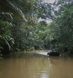 Schiffsreise Amazonas Forest RIver