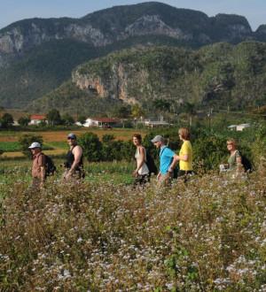 Kuba: Wandern durch die Kalksteinhügel-Landschaft in Kubas Tabakanbaugebiet Vinales. Hikinger at Vinales in Pinar del Rio.