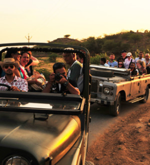 Indien: Jeep Safari Poshina 2390